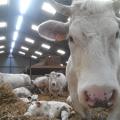 Visite de la ferme Delmotte
